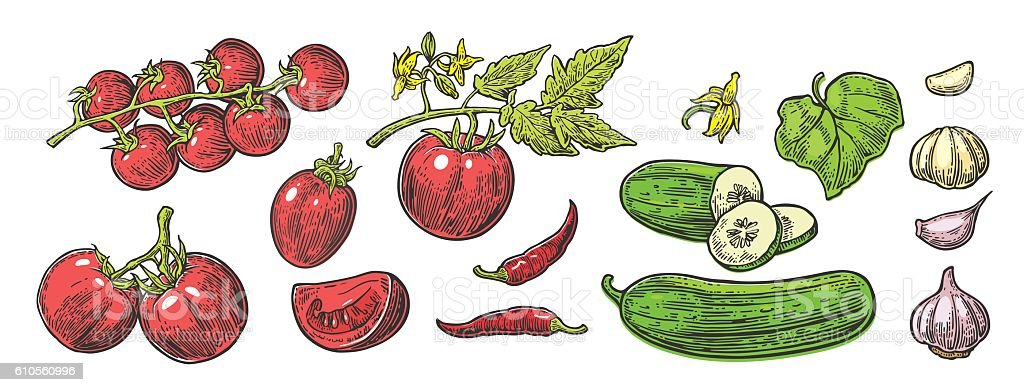 Cucumbers, Garlic, Chili, Tomato whole, half, slices, leaf and flower. vector art illustration