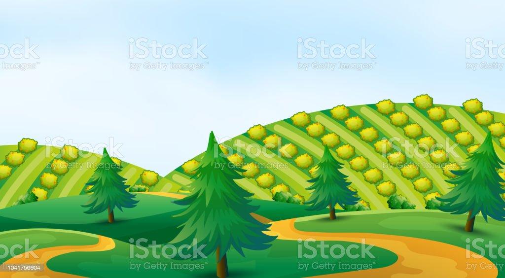 Ilustración De Cultivo En Terrazas De Banco Y Más Vectores