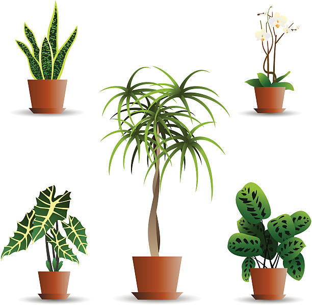 Culture plants Plants for your web garden. potted plant stock illustrations