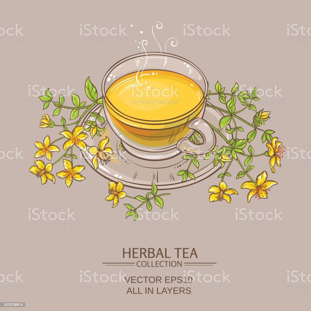 cup of tutsan tea  vector illustration