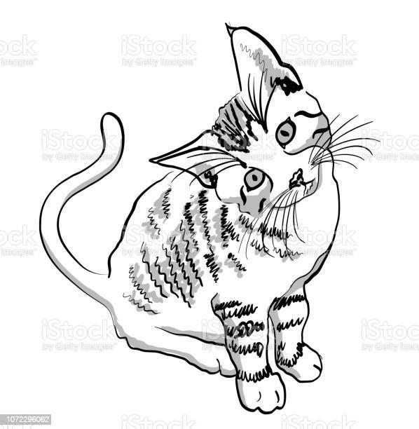 Curious kitty vector id1072296062?b=1&k=6&m=1072296062&s=612x612&h=nianxfkh8cmruzgybx6svjwwo0d5 0ts27wcinz5cgy=