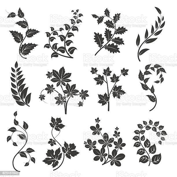 Curly branches silhouettes with leaves vector id625451642?b=1&k=6&m=625451642&s=612x612&h=yrotpfirmdrz oqug50nihymbb0x1tzuznizn1jl4ke=