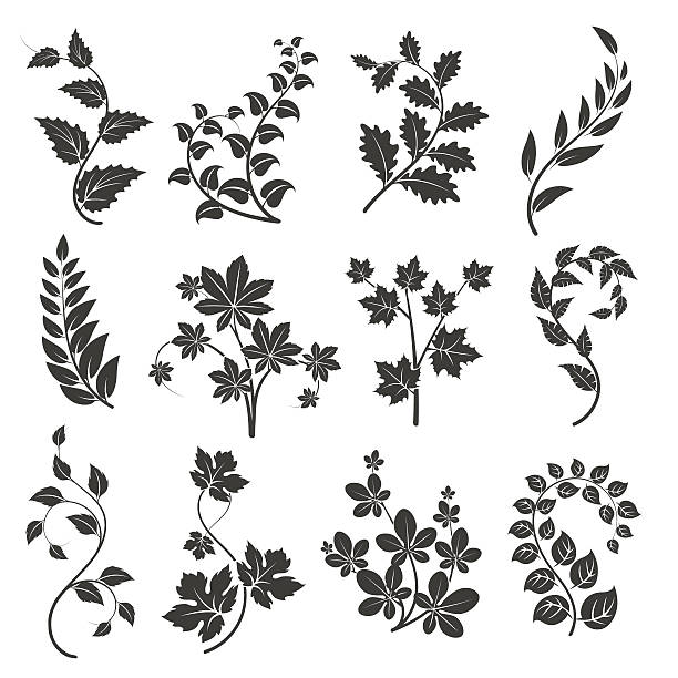 curly branches silhouettes with leaves - vine stock illustrations, clip art, cartoons, & icons