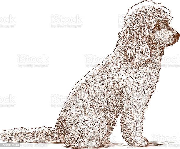 Curly dog vector id538915943?b=1&k=6&m=538915943&s=612x612&h=d9ijty0sxsxnxud0ls5cqyub0vljd6lovsnbmcij6a0=