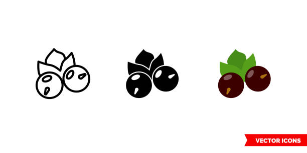 Currant icon of 3 types color, black and white, outline. Isolated vector sign symbol Currant icon of 3 types. Isolated vector sign symbol. black currant stock illustrations