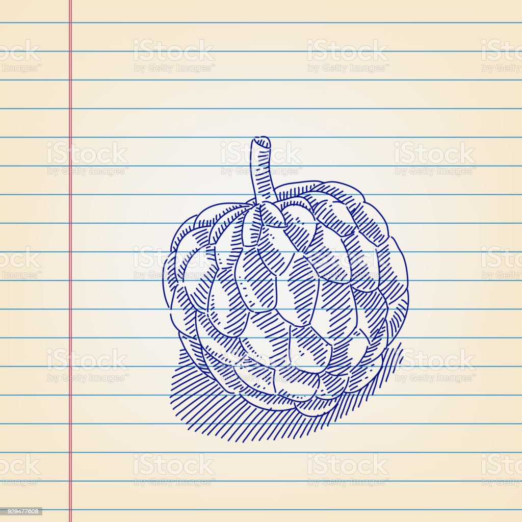 Drawing Picture Of Custard Apple