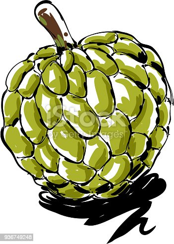 drawing of  Custard apple , Elements are grouped.contains eps10 and high resolution jpeg.