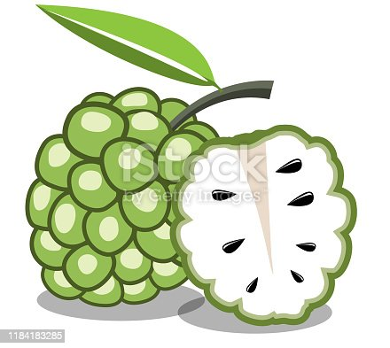 custard apple flat icon on white background