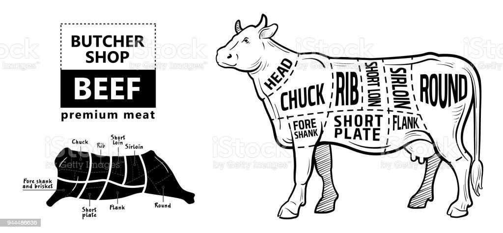 Schnitt Der Rindfleischsatz Plakatmetzgerdiagramm Kuh Jahrgang ...