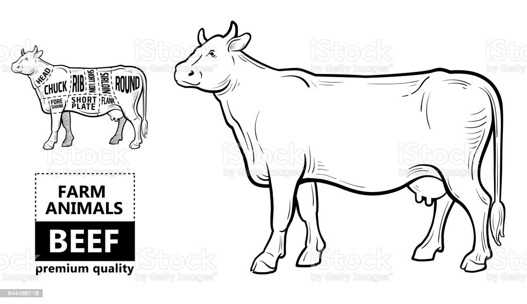 Cow Parts Diagram Pastrami - Car Wiring Diagrams Explained •