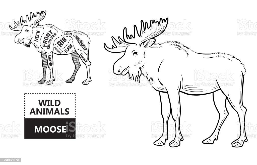 Cut Of Elk Set Poster Butcher Diagram Desertship Vintage Typographic