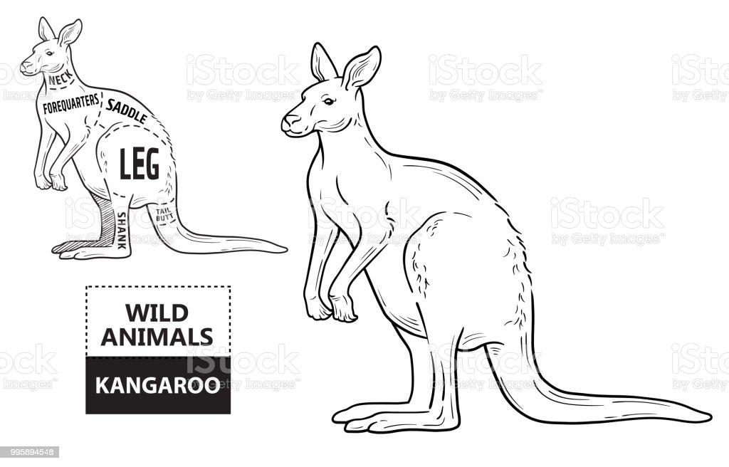 Diagram Of Kangaroo Body - Product Wiring Diagrams •