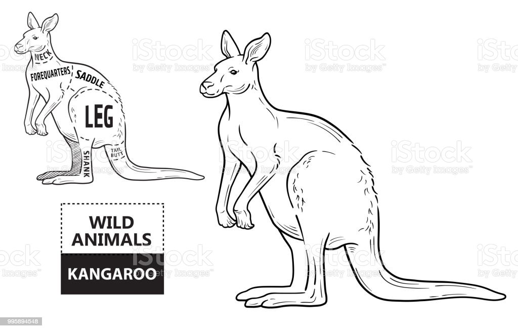 Cut Of Kangaroo Set Poster Butcher Diagram Desertship