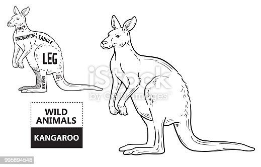 Cut of kangaroo set poster butcher diagram desertship vintage cut of kangaroo set poster butcher diagram desertship vintage typographic handdrawn stock vector art more images of animal 995894548 istock ccuart Choice Image