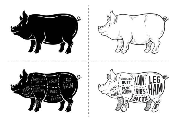 bildbanksillustrationer, clip art samt tecknat material och ikoner med skära av kött. affisch slaktare diagram, systemet och guide - fläsk. vintage typografisk handritade på svarta tavlan bakgrund. - loin