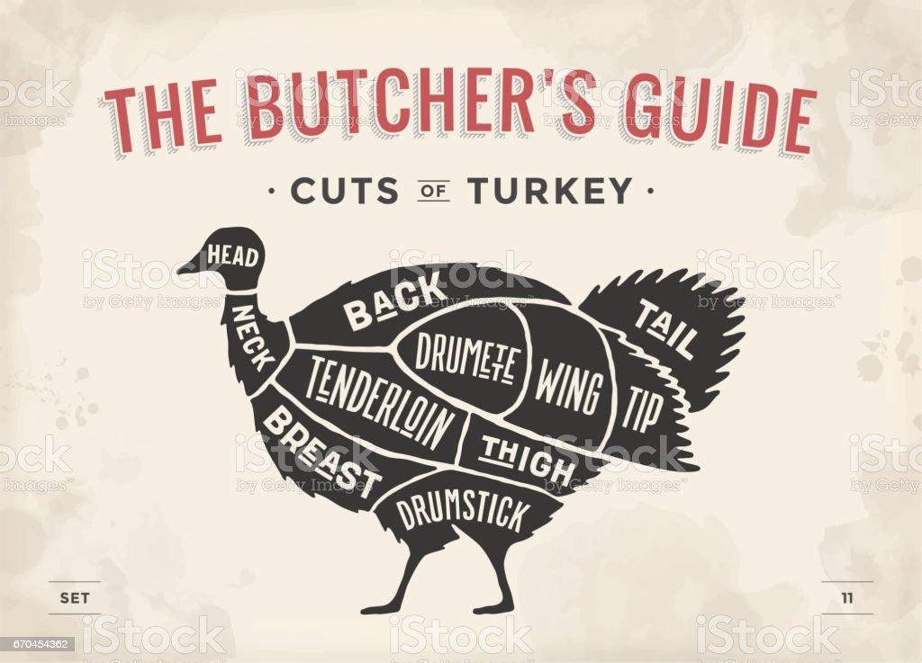 Cut of meat set. Poster Butcher diagram, scheme - Turkey vector art illustration
