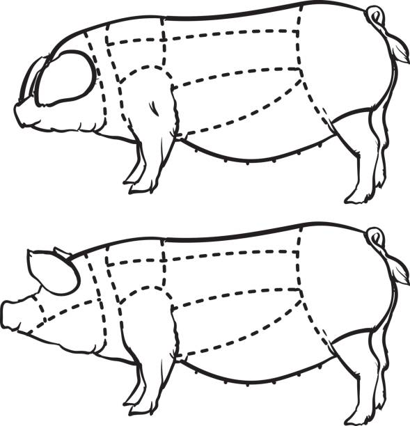 Royalty Free Pork Loin Clip Art, Vector Images