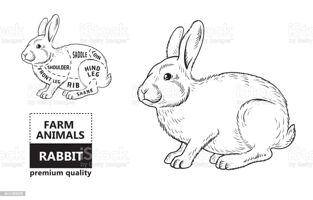 cut of rabbit poster butcher diagram for groceries meat stores butcher shop farmer market rabbit