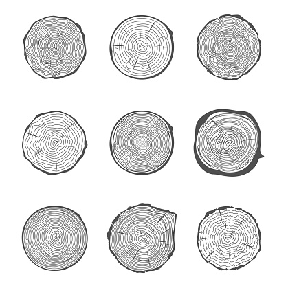 Cut tree rings background saw cut tree trunk natural decorative design set vector illustration