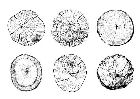 Cut tree trunks in vector