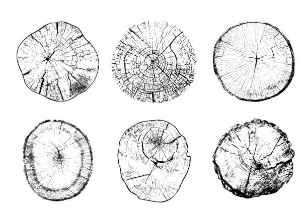Cut tree trunks in vector Set of cut tree trunks with circular rings isolated on white background. Textures of wood logs. Black and white vector illustration natural pattern stock illustrations