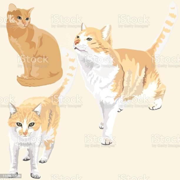 Cute and funny ginger cats vector id1148670336?b=1&k=6&m=1148670336&s=612x612&h=gn55mdiy5yzxl2lp2hyozqh5peehb0nd c5lplxmkc0=