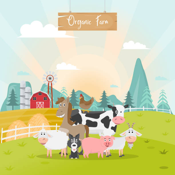 illustrations, cliparts, dessins animés et icônes de caricature de ferme animaux mignons dans une ferme rurale biologique. - animaux de la ferme