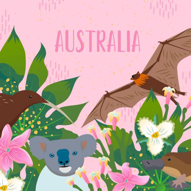 niedliche tiere australiens. kiwi, entenbilled, koala, ein fruchtfledermäuse mit tropischen blättern und blumen. - megabat stock-grafiken, -clipart, -cartoons und -symbole