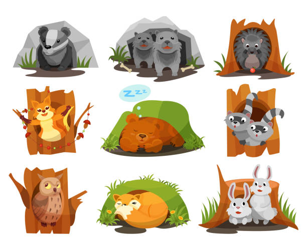 cute animals sitting in burrows and hollows set, badger, wolves cubs, hedgehog, squirrel, bear cub, raccoon, owlet, fox, hares inside their homes vector illustration - hibernation stock illustrations, clip art, cartoons, & icons