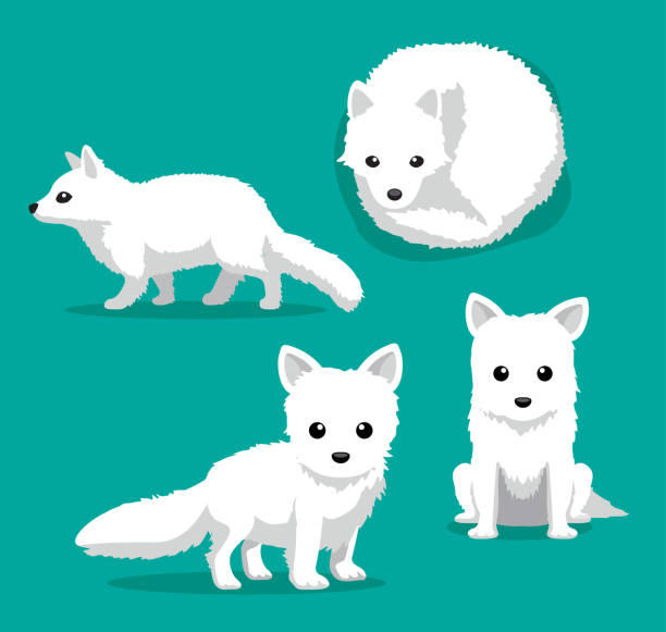 ilustrações de stock, clip art, desenhos animados e ícones de cute arctic fox cartoon vector illustration - raposa ártica