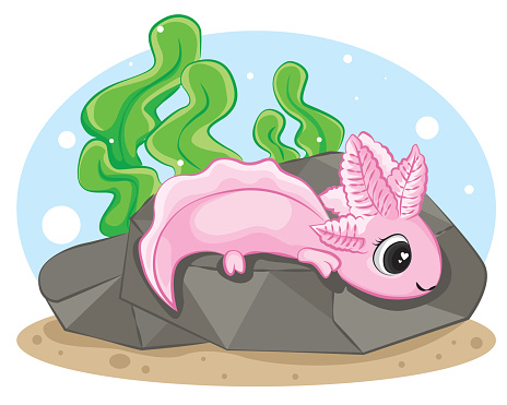 Cute Axolotl (Ambystoma mexicanum) On the Rock of a light blue background