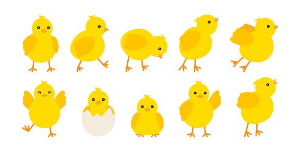 Cute baby chickens set in different poses for easter design. Little yellow cartoon chicks. Vector illustration isolated on white background
