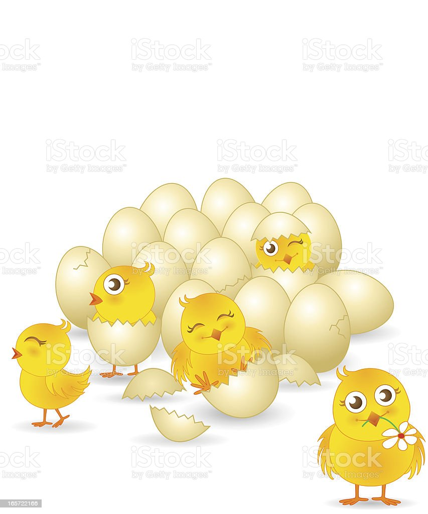 Cute Baby Chicks royalty-free stock vector art