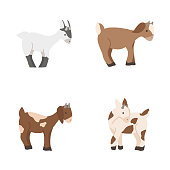 Cute baby goats vector set isolated on white background. Farm animal goat cartoon character illustration.