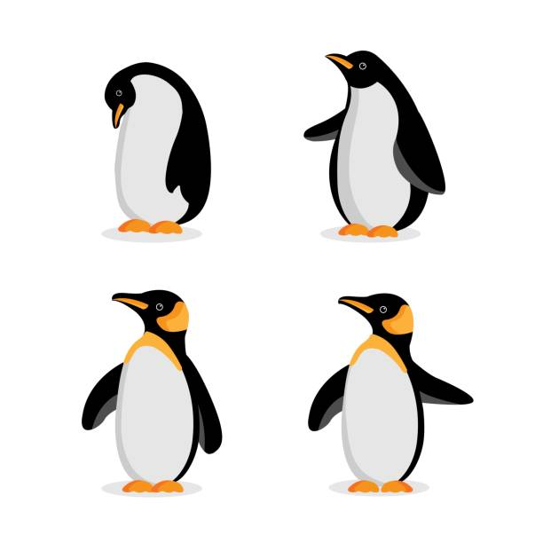 Cute Baby Penguin cartoon in different poses. Vector illustration. Cute Baby Penguin cartoon in different poses. Vector illustration. penguin stock illustrations