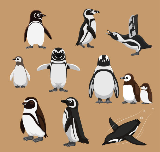 stockillustraties, clipart, cartoons en iconen met leuke gestreepte afrikaanse pinguïn familie cartoon vectorillustratie - pinguins swimming