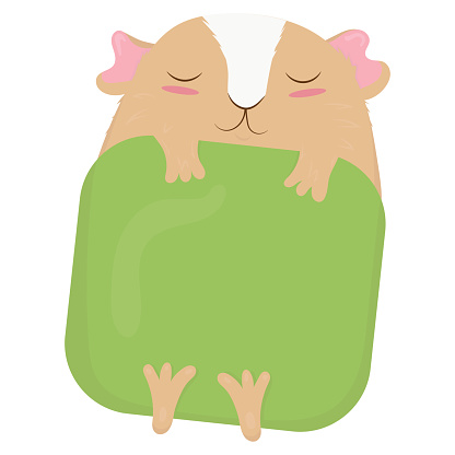 cute beige guinea pig with white fur on the face with pink ears and cheeks lies under a green blanket and sleeps, cute domestic rodent, vector illustration