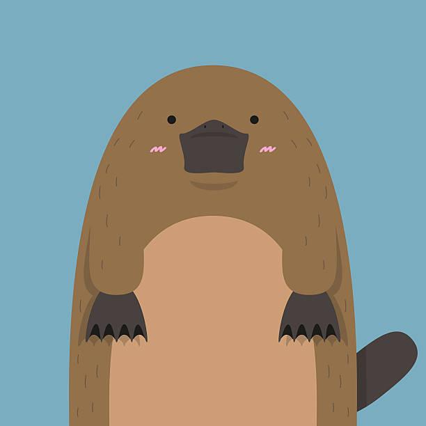 bildbanksillustrationer, clip art samt tecknat material och ikoner med cute big fat platypus - platypus