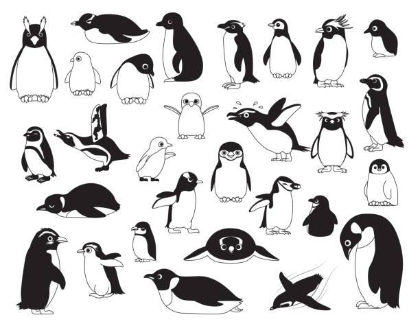 stockillustraties, clipart, cartoons en iconen met schattige vogel cartoon van verschillende pinguïn zwart-wit afbeelding instellen - pinguins swimming