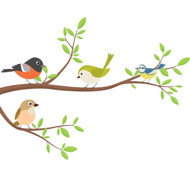 bildbanksillustrationer, clip art samt tecknat material och ikoner med söta fåglar med träd gren - bo