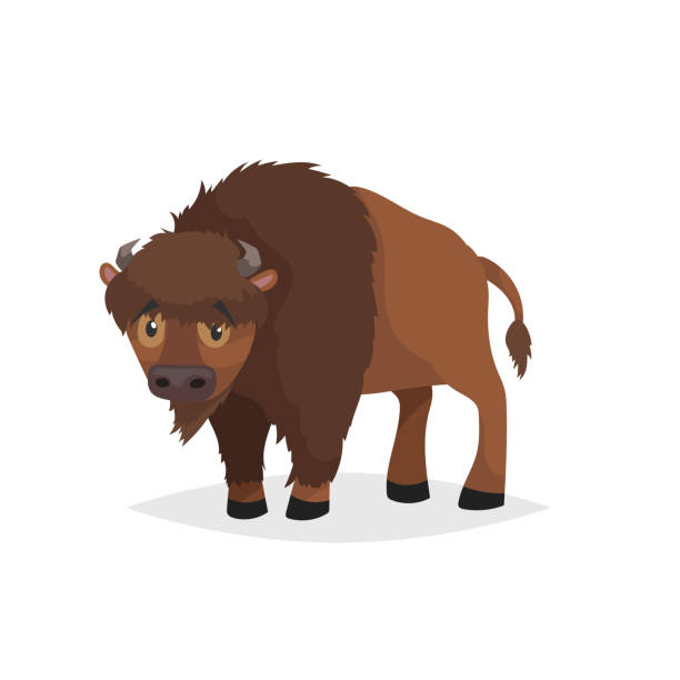 Cute bison standing. Cartoon comic style vector illustration of forest wild animal. Buffalo. Europe and north America animal. Cute bison standing. Cartoon comic style vector illustration of forest wild animal. Buffalo. Europe and north America animal. EPS10 + JPEG preview. american bison stock illustrations