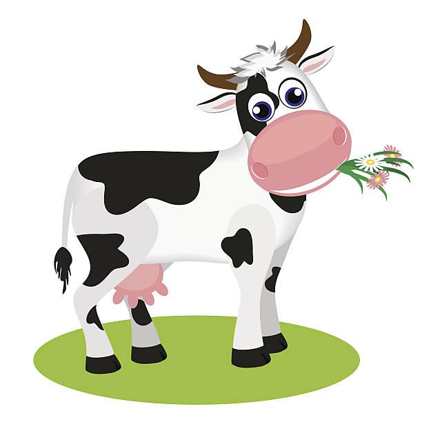 süße schwarze und weiße kuh essen gänseblümchen - lustige kuh bilder stock-grafiken, -clipart, -cartoons und -symbole