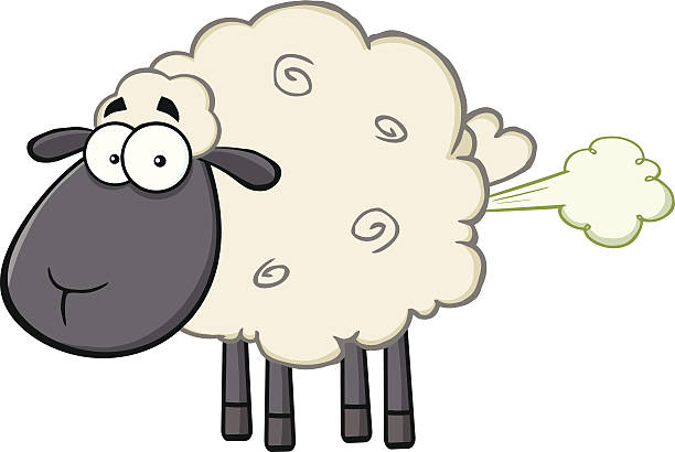 Картинки, рисунок овечки смешной