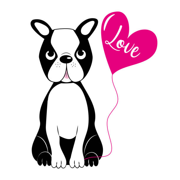 Download Drawing Of A Cute Boston Terrier Illustrations, Royalty ...