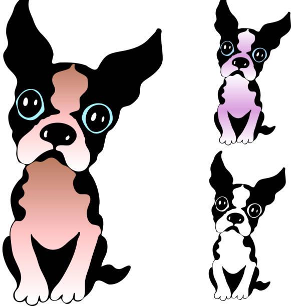 cute boston terrier vector cartoon illustration vector art illustration