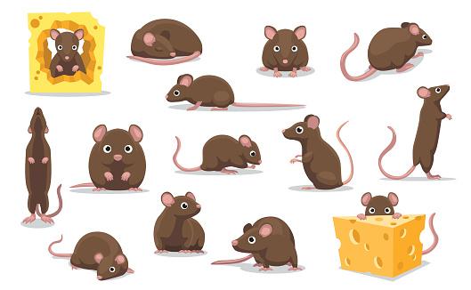 Cute Brown Rat Various Poses Cartoon Vector Illustration