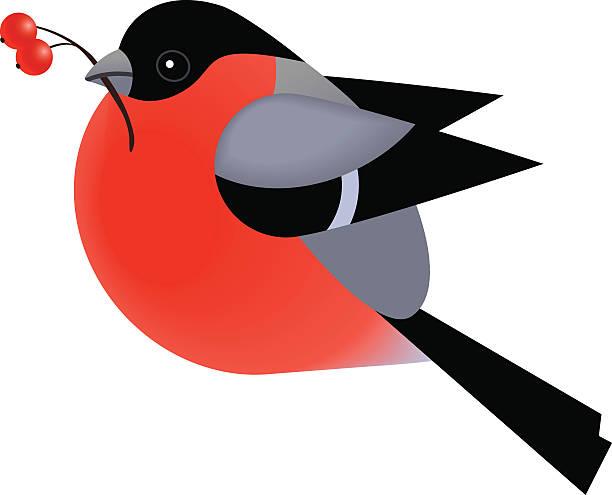 süße dompfaff vogel isoliert auf weißem vektor-illustration - dompfaff stock-grafiken, -clipart, -cartoons und -symbole