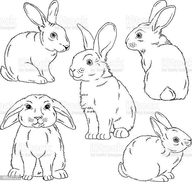 Cute bunny outlined sketches vector id532257247?b=1&k=6&m=532257247&s=612x612&h=i6rvvibjyeqvctrahkkklyt2ppginwuc wgv o2cup8=