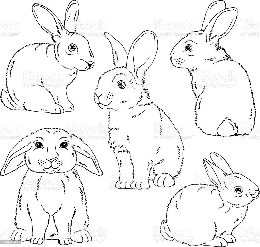 Cute bunny outlined sketches vector art illustration