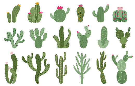 Cute cactus. Succulents and cacti flower, green prickly desert house plants, tropical home plants isolated vector illustration icons set